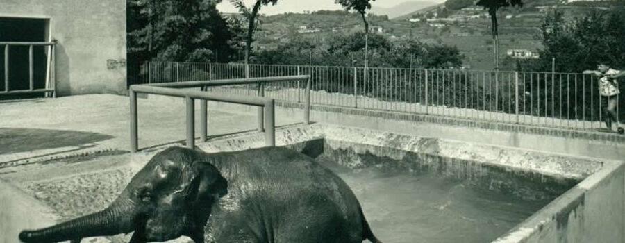 Lo Zoo del Castello di Brescia (1)