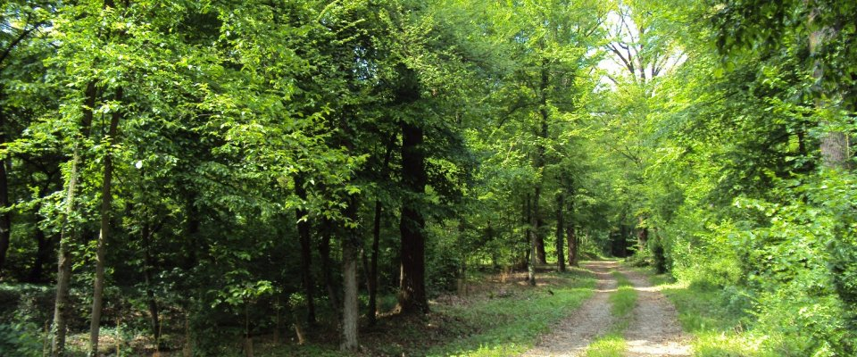 Il Monte Netto bosco planiziale